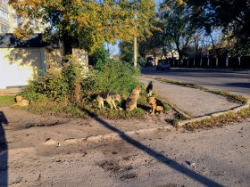 Stray dogs are all over Zhytomyr. They are perfectly friendly. Chris' cluster partners with an NGO that works to spay and neuter them, in an effort to decrease the population.